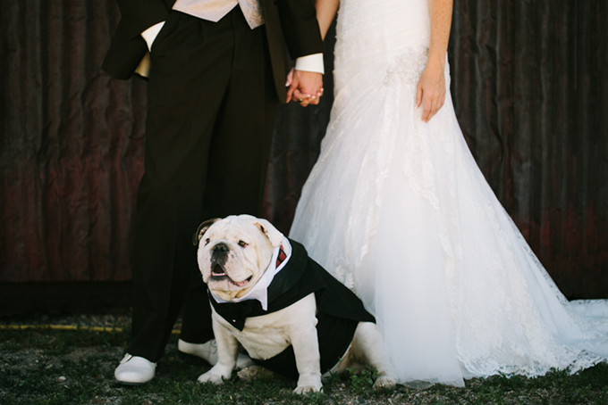 bulldog ring bearer | Joe+Kathrina | Glamour & Grace
