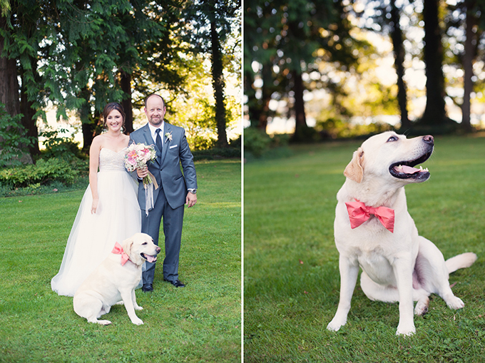 bow tied pup | Melissa Gidney Photography | Glamour & Grace