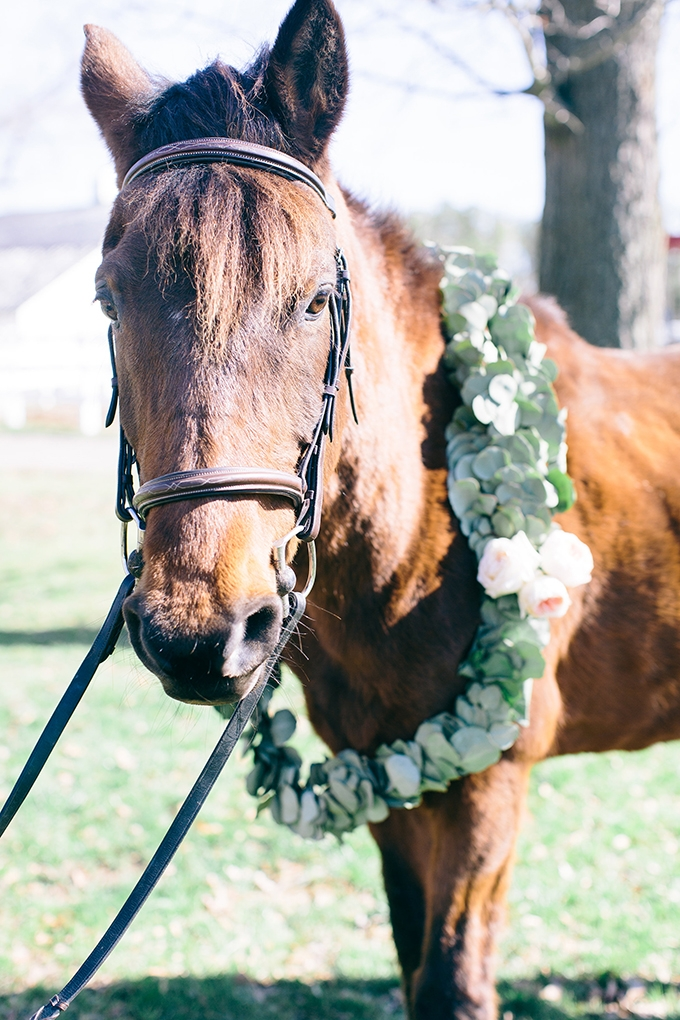 horse with garland | Shalese Danielle Photography | Glamour & Grace
